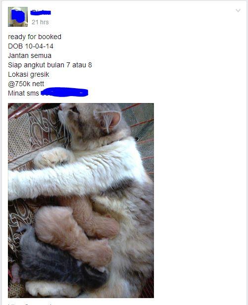 kucing bookingan