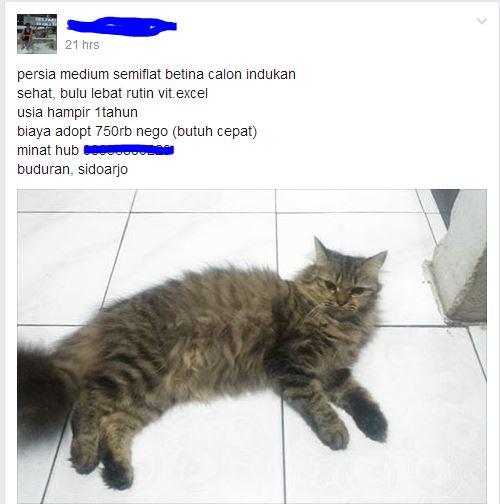 kucing indukan