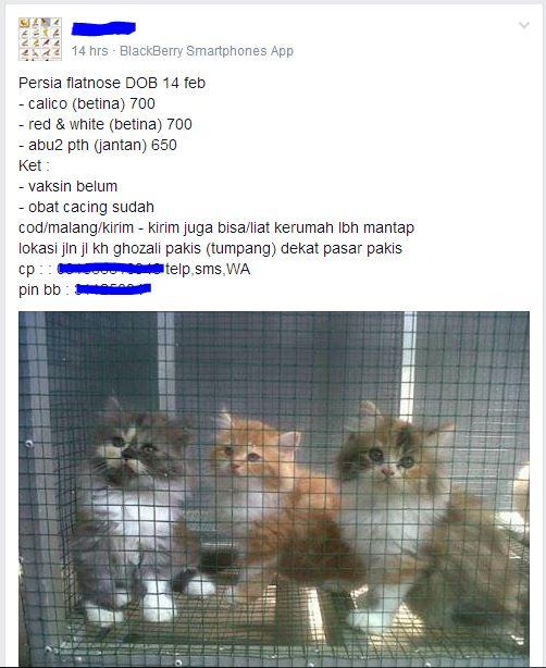 kucing kiriman
